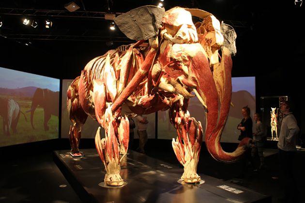 Elefante Animal Inside Out
